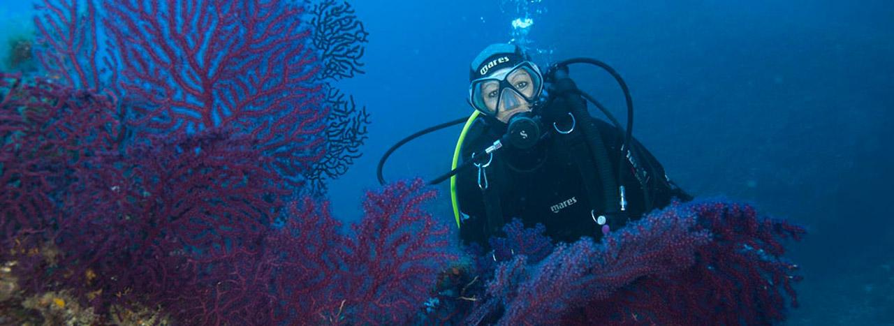 Immersioni Pianosa - Elba - Diving - Center - Pianosa